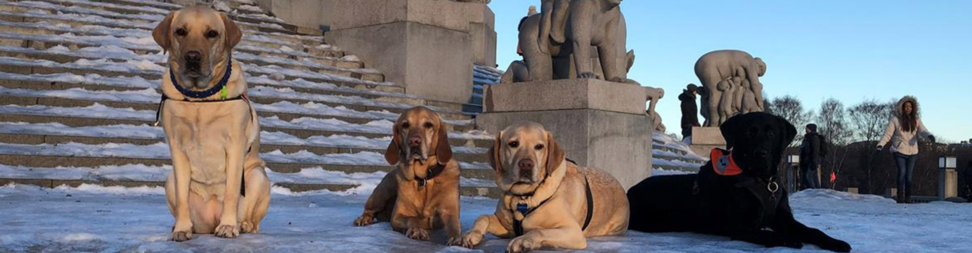 4 Service dogs resting in the park